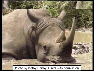 Rhino on Fall Break